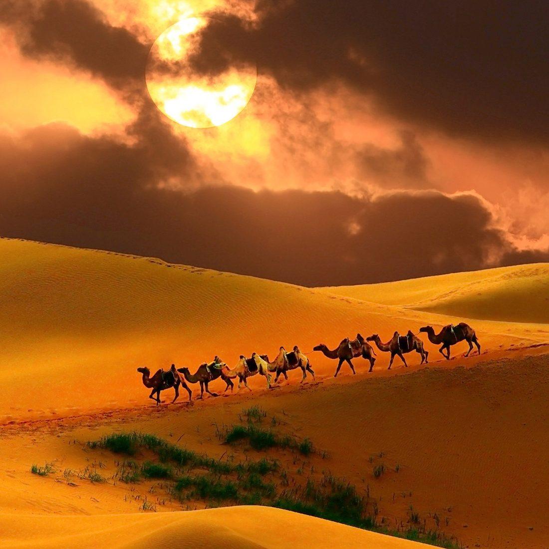 Caravan in the desert, Mongolia