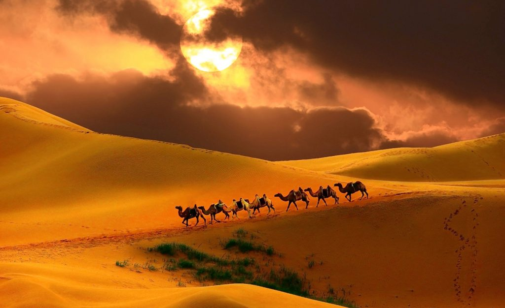 Caravan in the desert, Mongolia